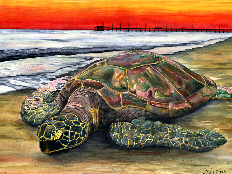 josh moore-sunset of the species
